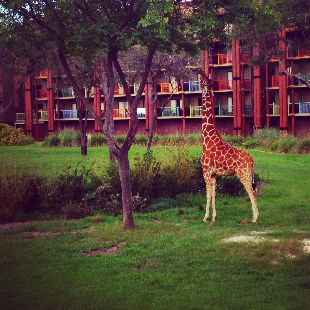Animal Kingdom Lodge Date Night